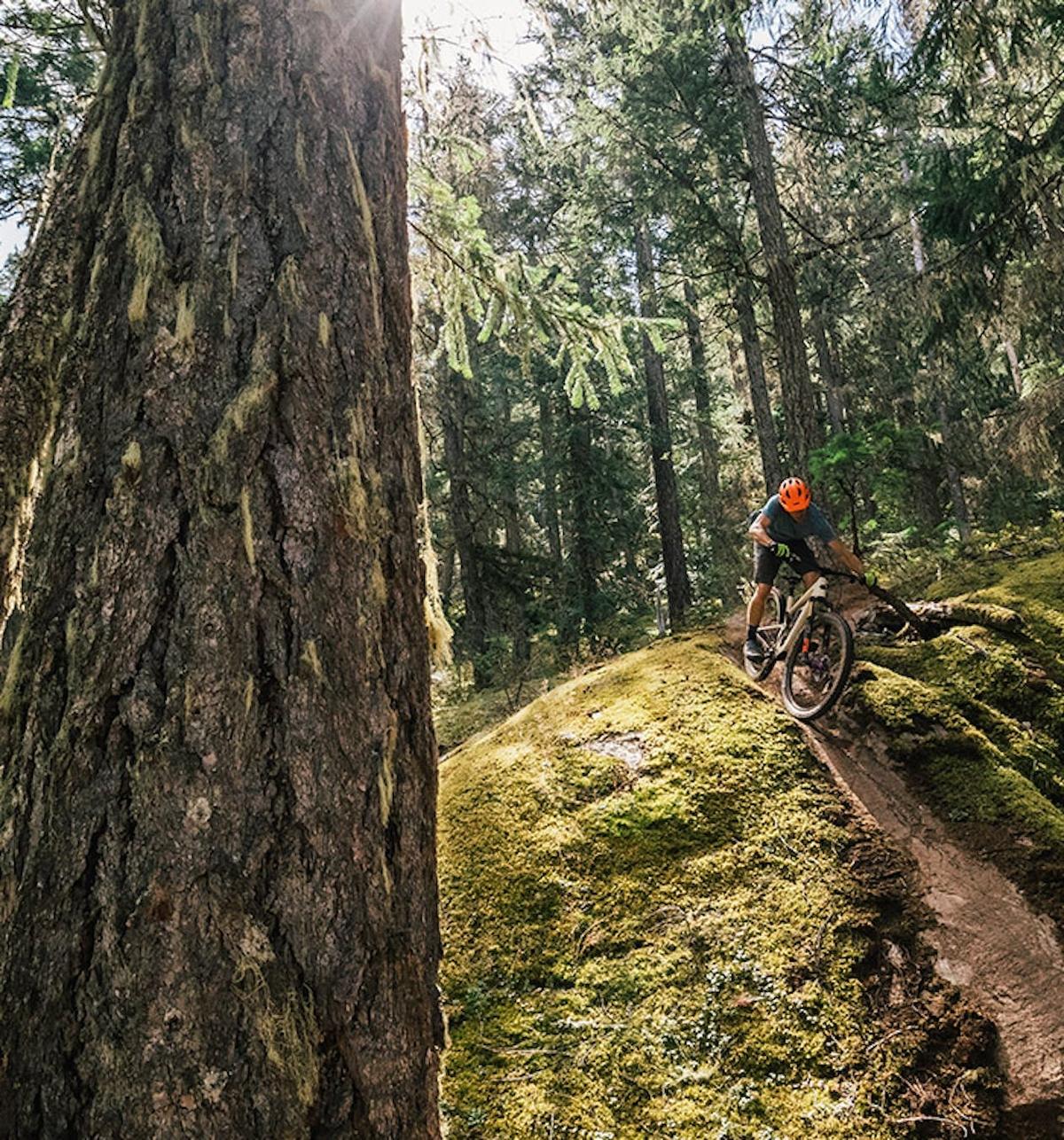 Le Tallboy à travers la forêt